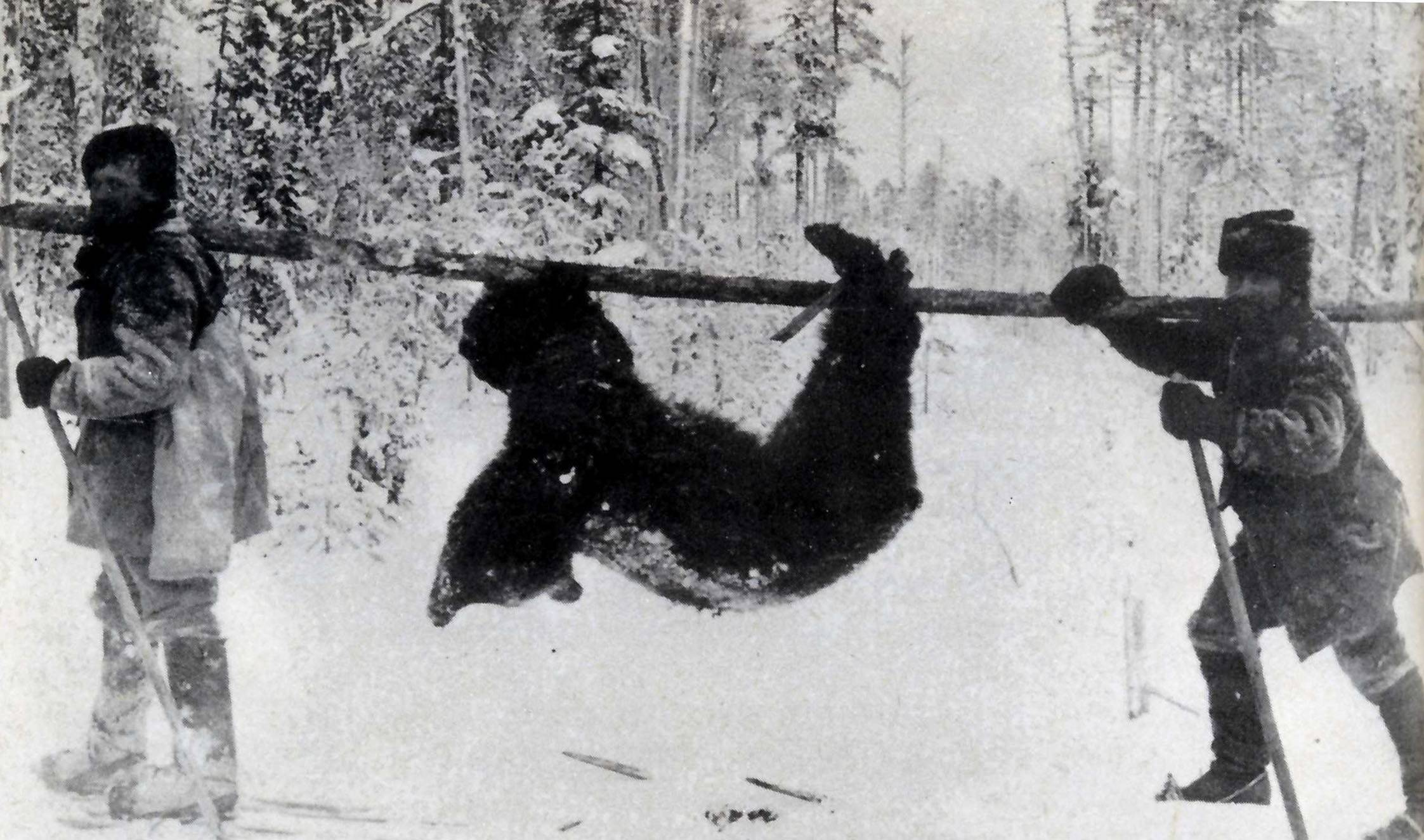 Рогатина для охоты на медведя – просто и эффективно
