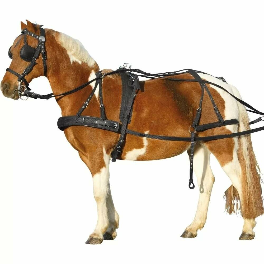 Инструкция по запряжке лошадей