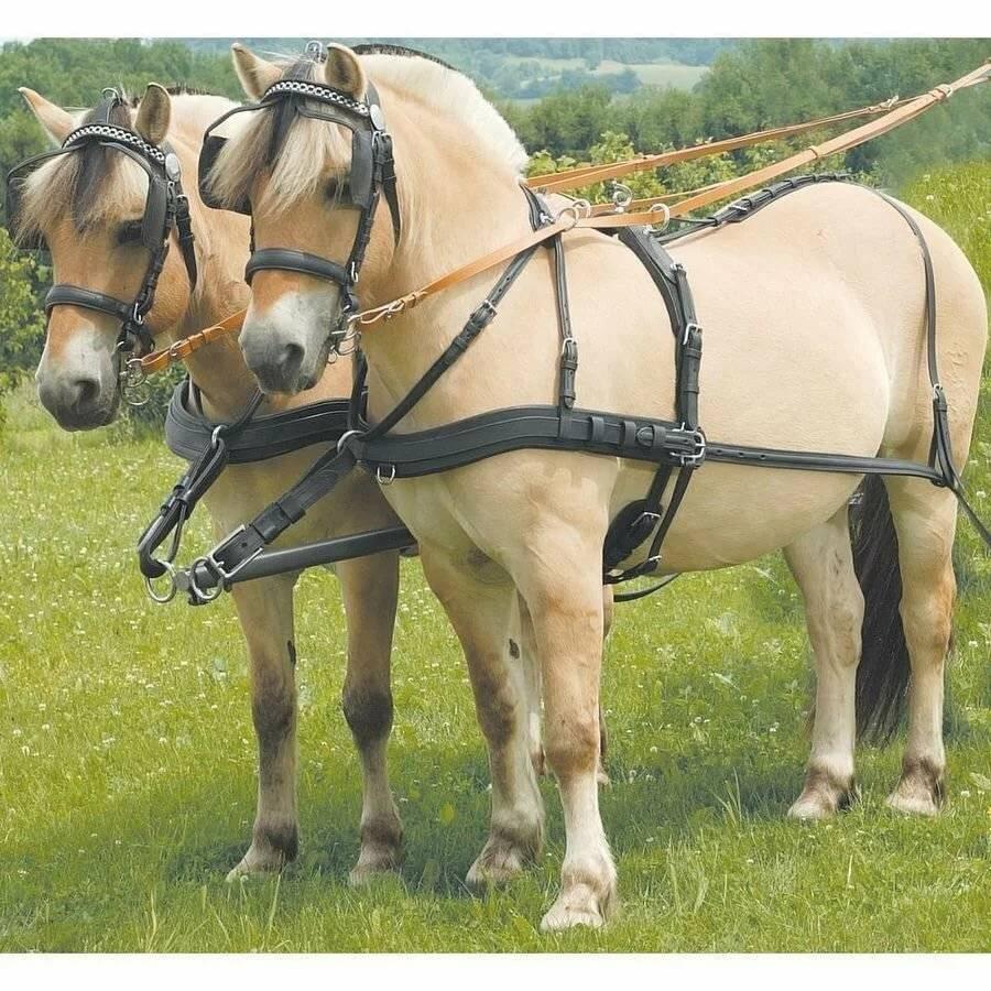 Последовательность запряжки лошади в различную упряж. - о лошадях | коновод