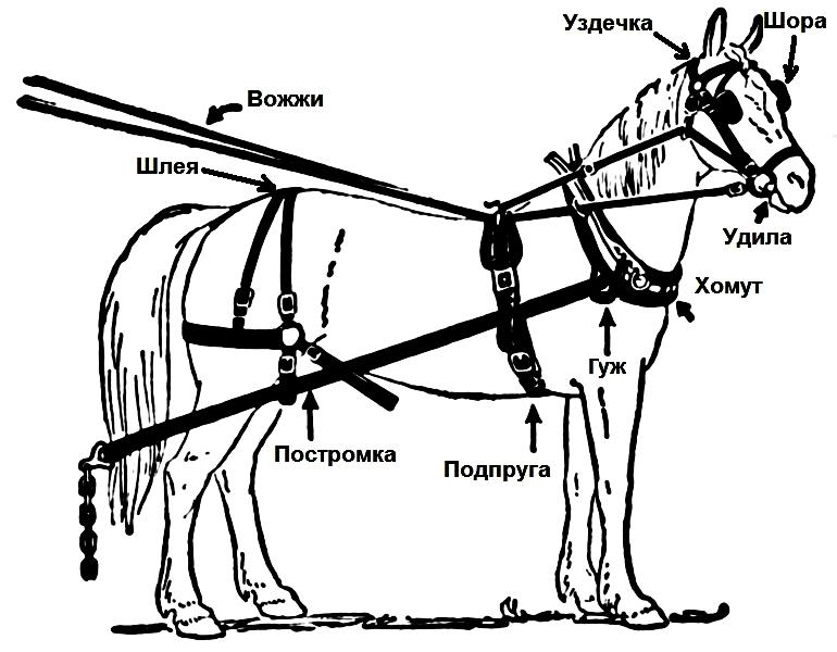 Как запрягать лошадь?