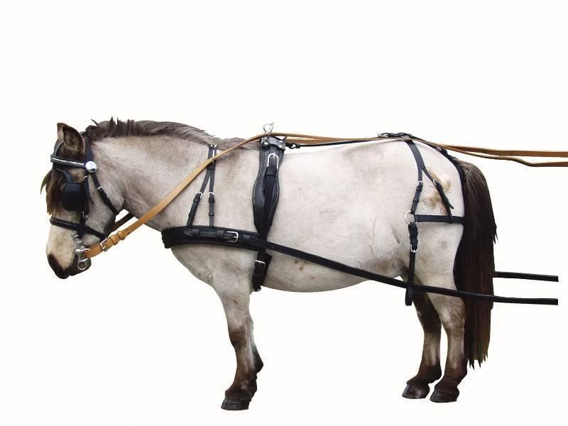 Запряжки лошадей. какие они бывают