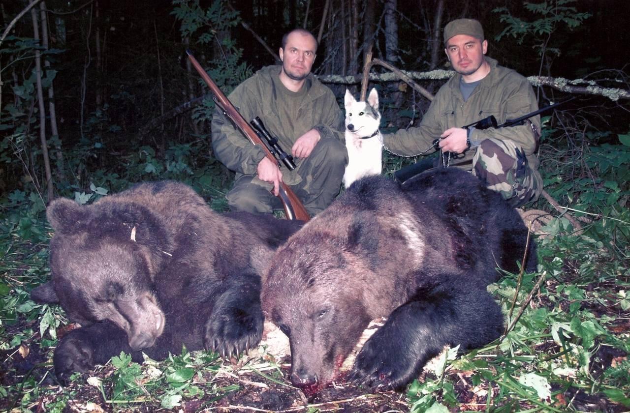 Оружие для охоты на медведя: выбираем ружье, пули и патроны