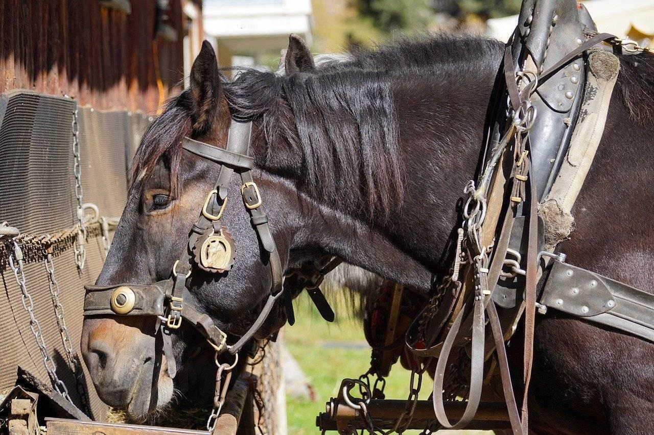 Упряжь для лошади: из чего состоит сбруя, виды упряжи