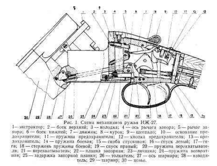 Бюджетное ружье — двустволка ИЖ-43