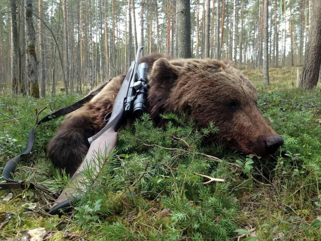 8 способов охоты на медведя + советы по выбору оружия