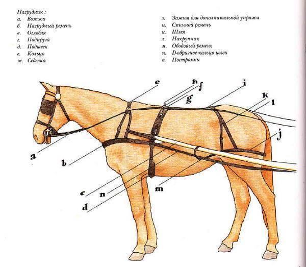 Тройка лошадей без конной упряжи да сбруи далеко не ускачет